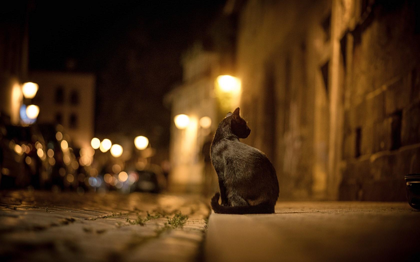 black cat night street light blur wallpaper 1680x1050