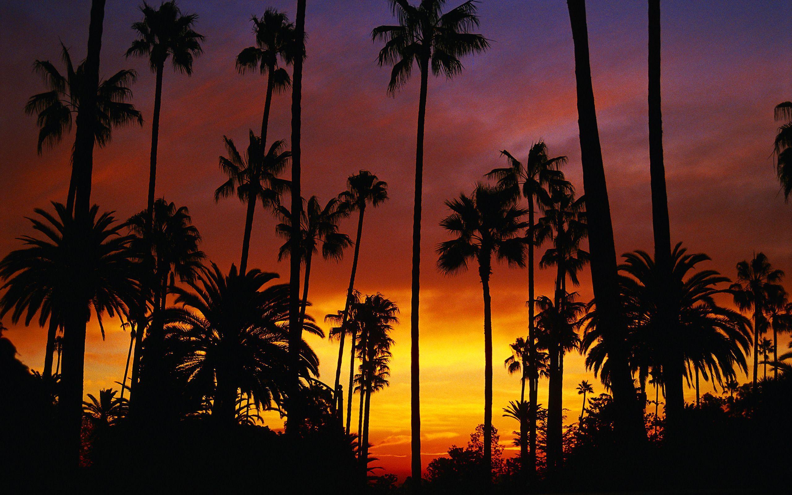 Hotel California Wallpapers   Top Hotel California 2560x1600