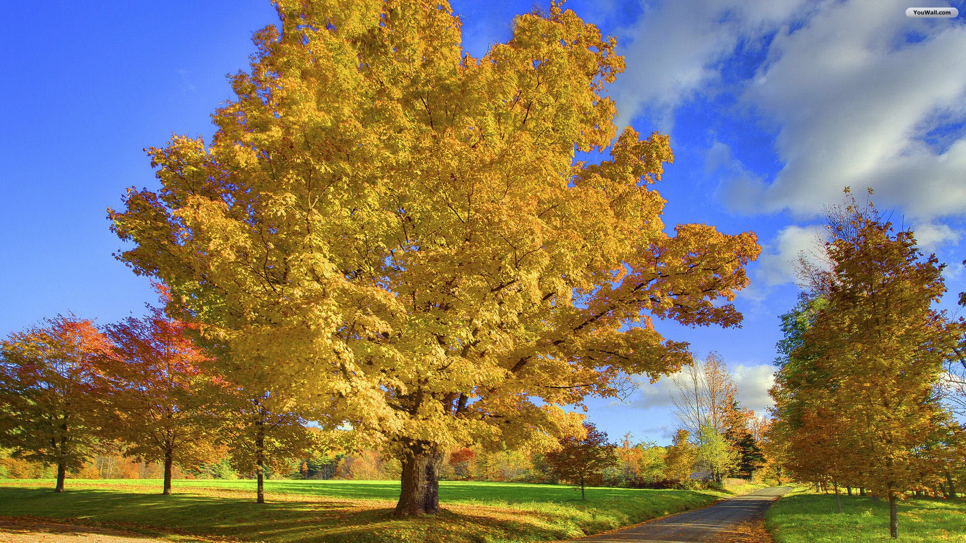 Autumn Trees Backgrounds wallpaper Autumn Trees Backgrounds hd 1920x1080