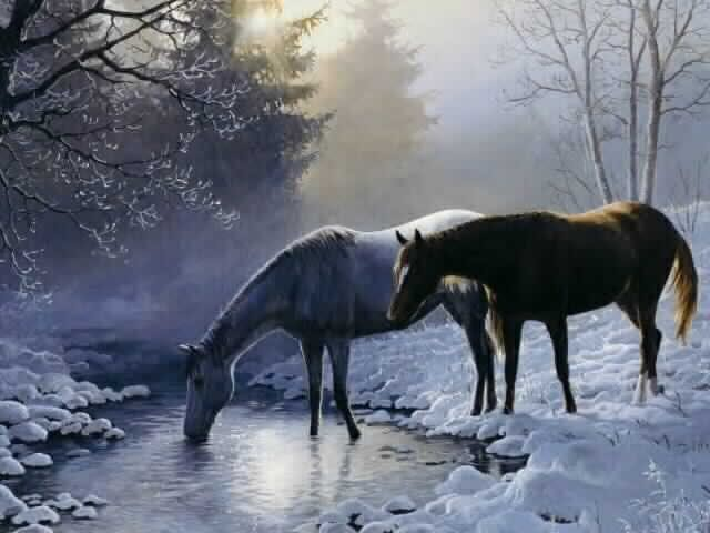 Horse Background   Horse Wallpaper for Desktop 640x480