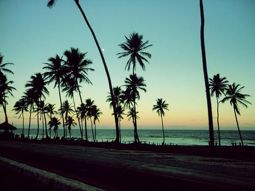 cali california beach ocean palm trees sunset palm tree the beach 500x375