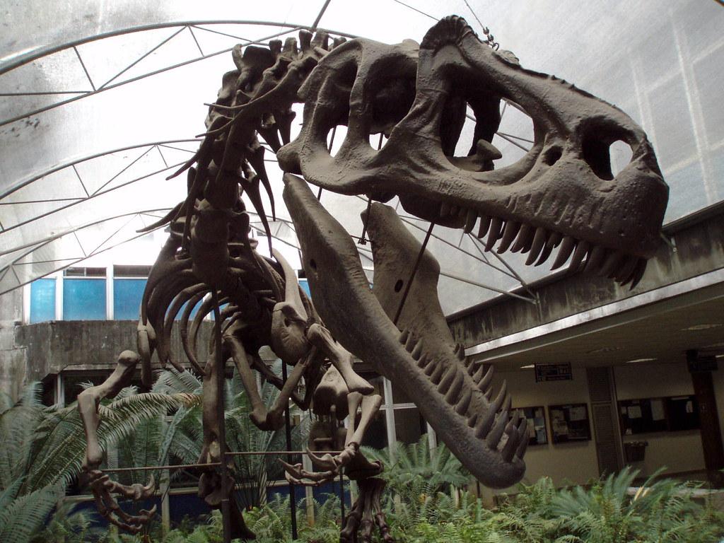 Remains of Godzillasaurus Rozjk Flickr 1024x768