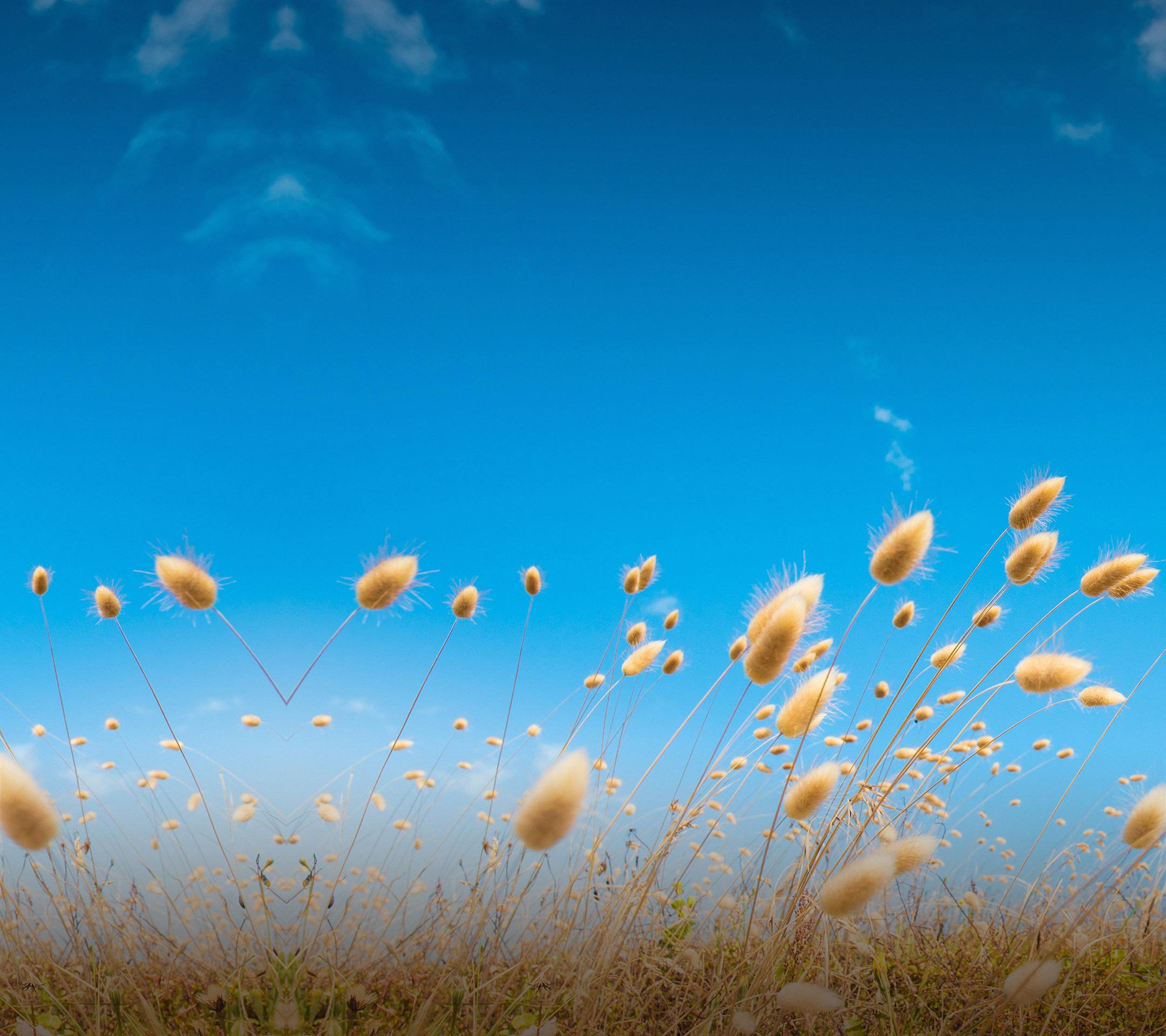 HTC One M9 Hintergrundbilder zum Download   Bild 4   Bilderserie 2160x1920