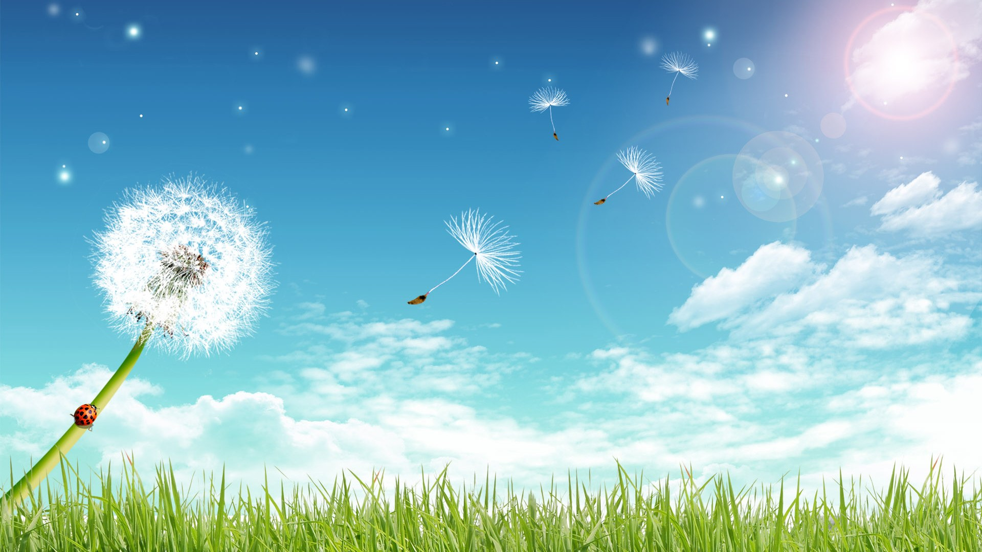 dandelion Grass photo Sky sun clouds download wallpapers for 1920x1080