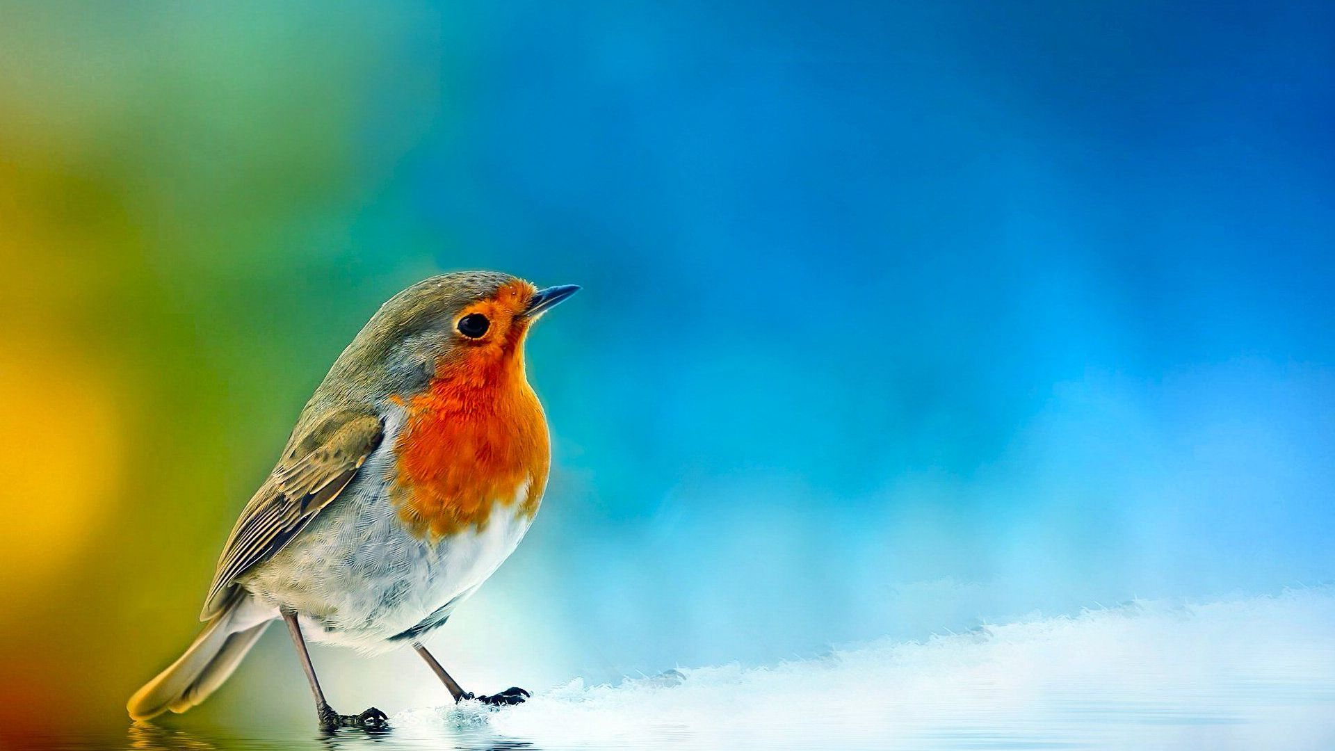Download Small orange bird wallpaper 1920x1080