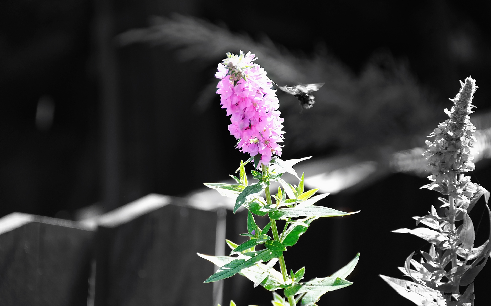 Nice Purple Background