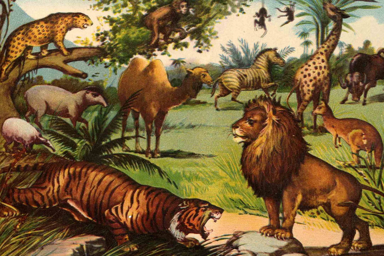 animals safari animal jungle africa cool wallpapersafari 1899 antique print