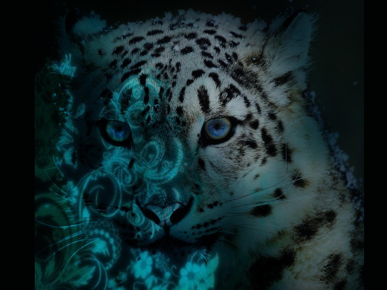 Snow Leopard Backgrounds Wallpapersafari