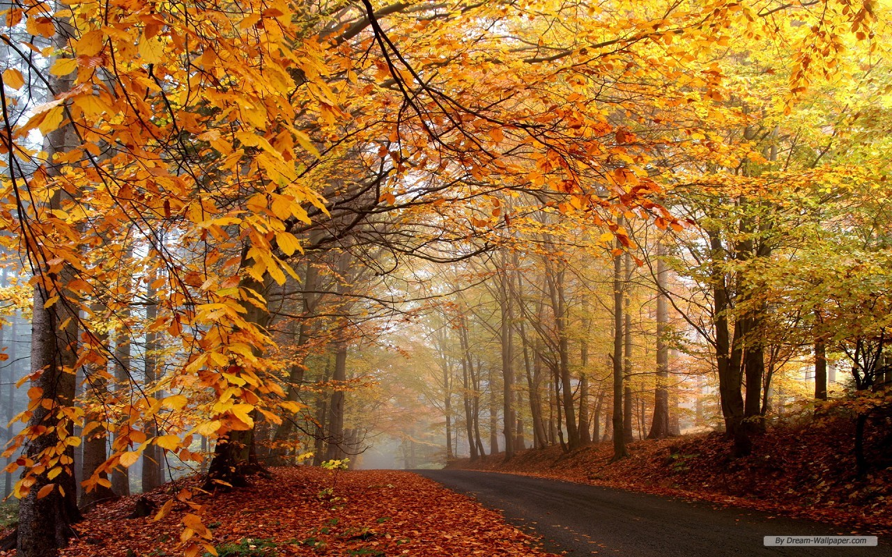 wallpaperautumn landscape 1 wallpaper1280x800free wallpaper 13html 1280x800