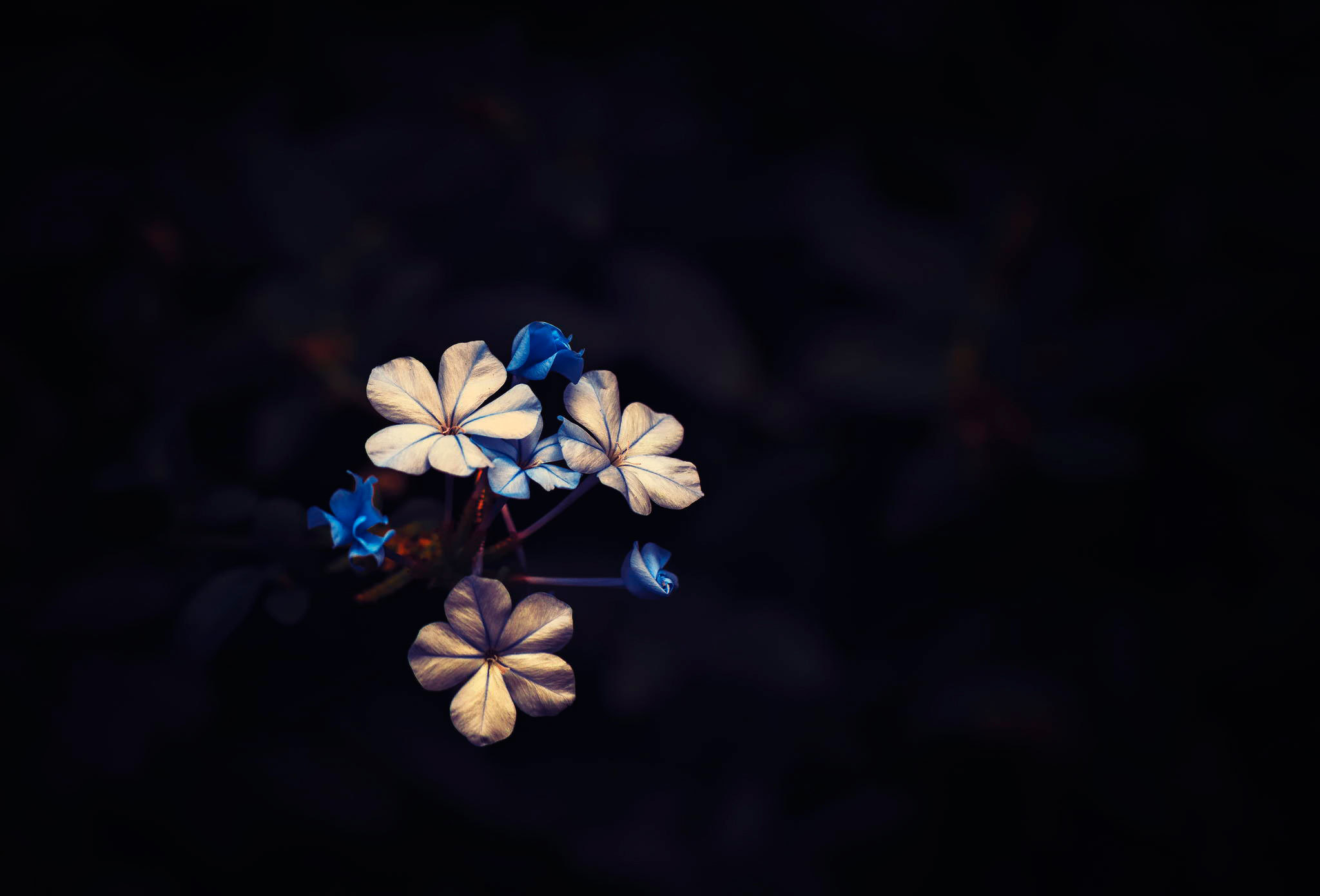 Flowers on Black Background Wallpaper - WallpaperSafari