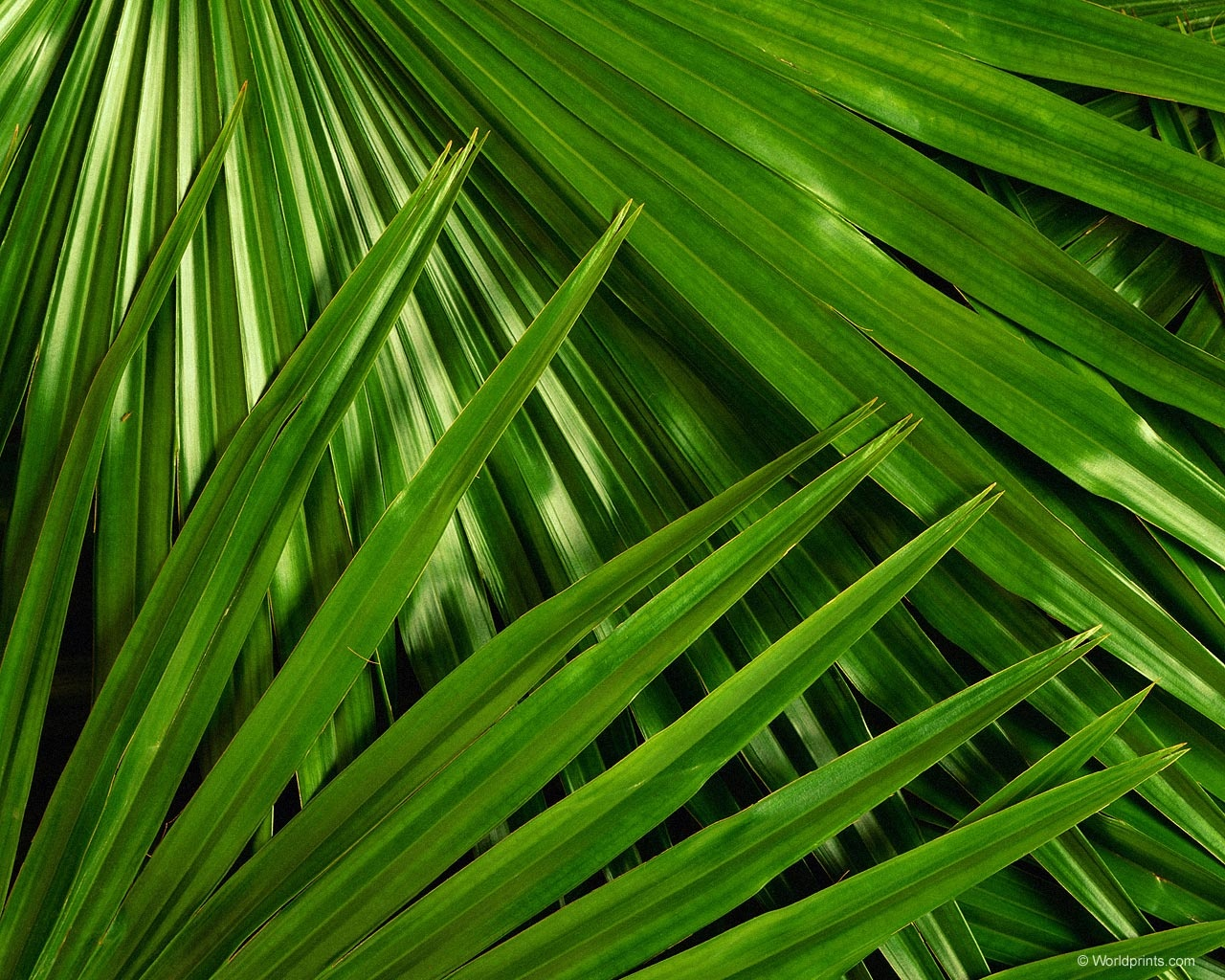 Palm Leaves Wallpaper - WallpaperSafari