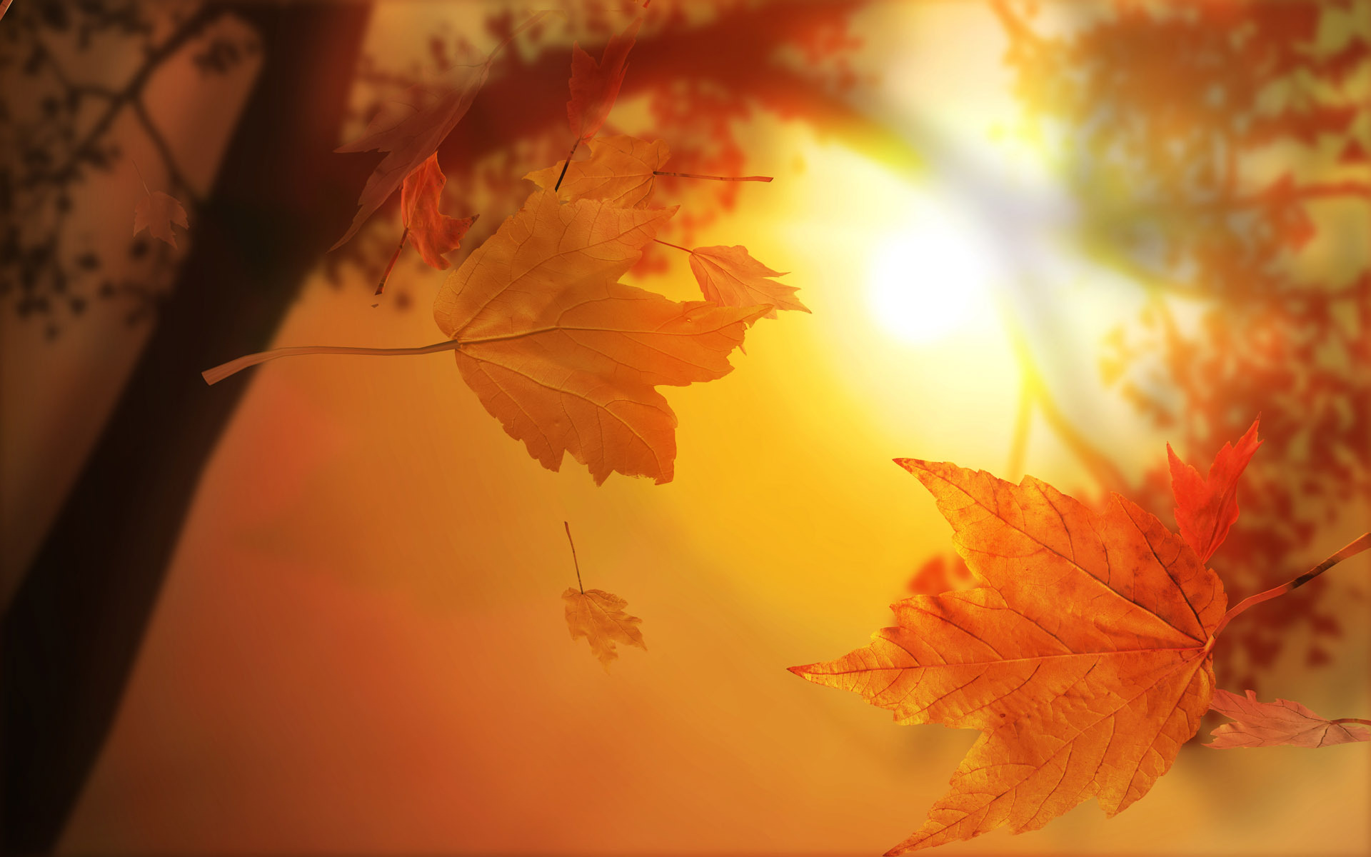 Back Gallery For autumn leaves wallpapers 1920x1200