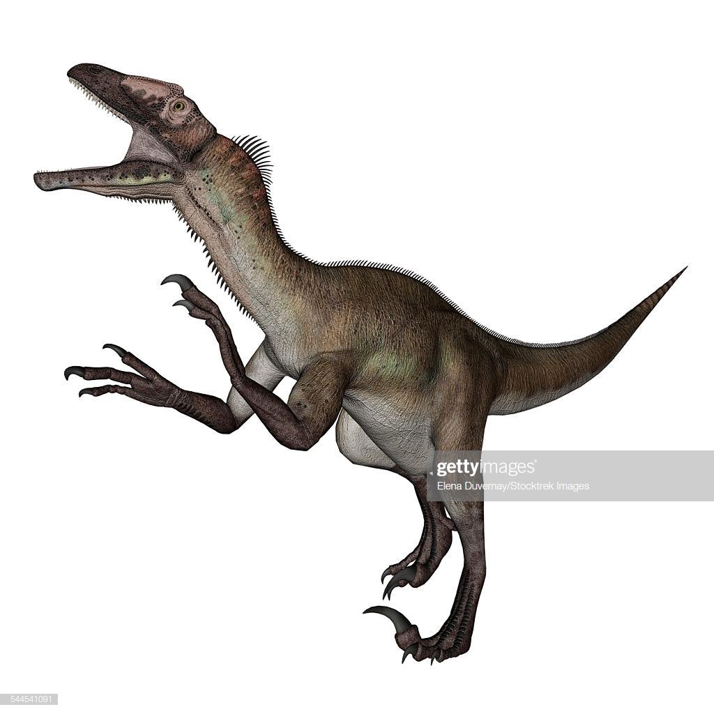 Utahraptor Dinosaur Roaring White Background stock illustration 1024x1024