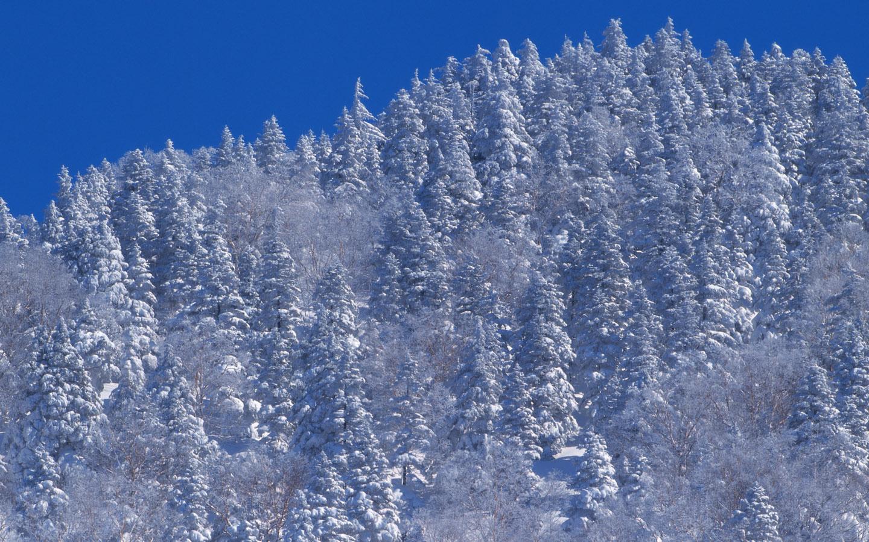 Winter Snow Photos Snow Scenes Wallpapers 1440900 NO25 Wallpaper 1440x900