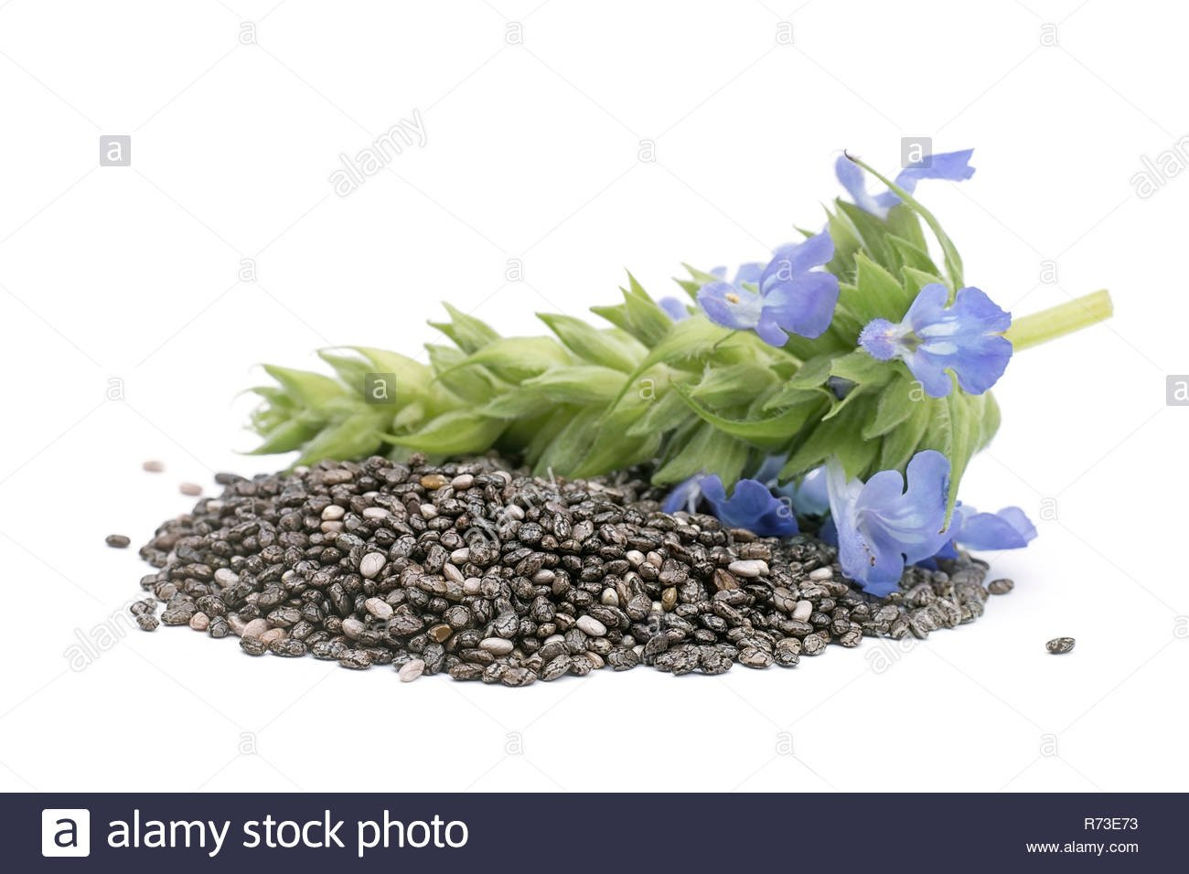 Chia Salvia hispanica Pile of seeds with flowers on white 1300x956