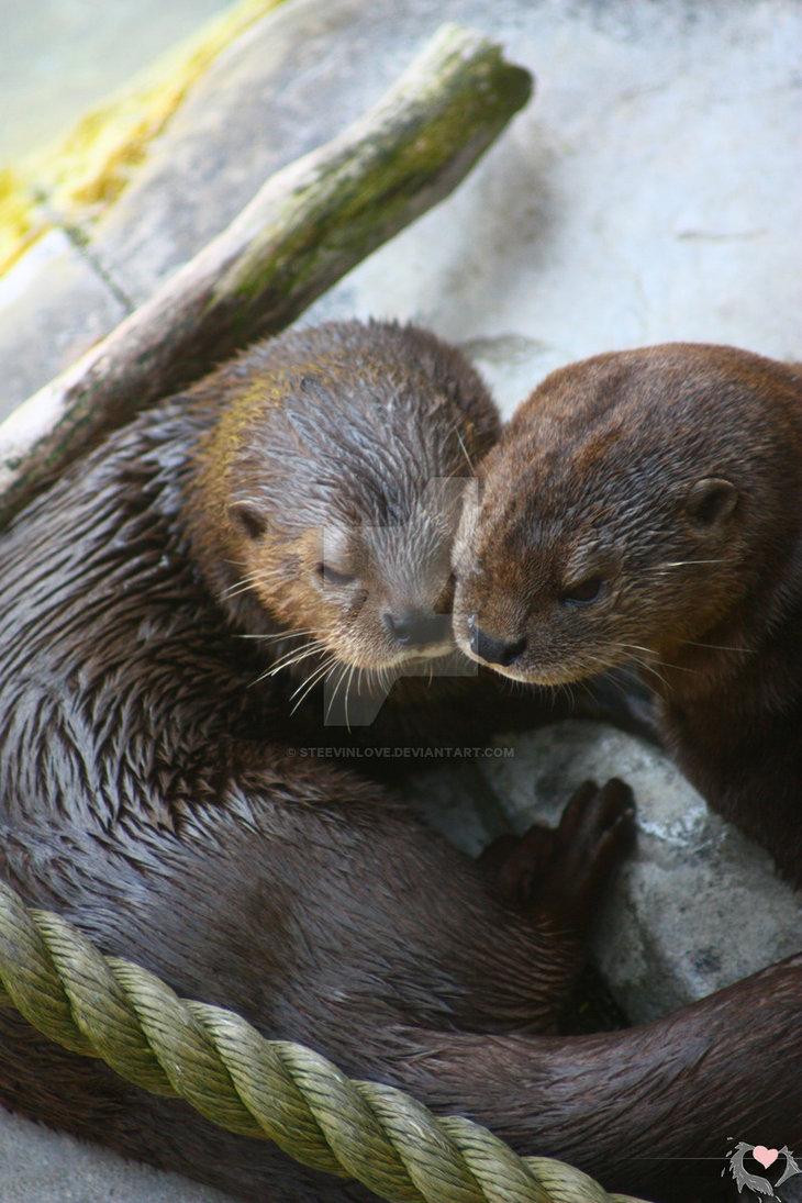 Otter Love by steevinlove 730x1095