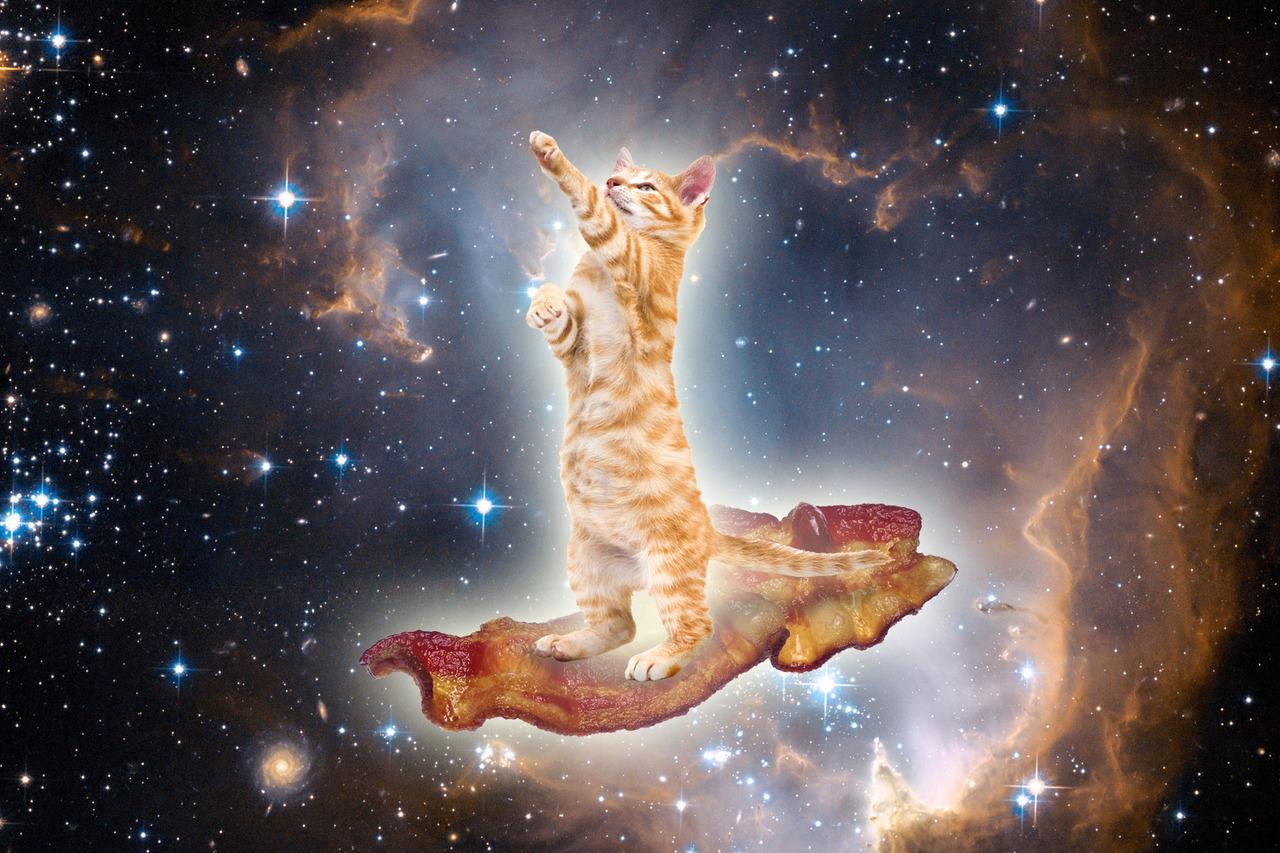 Galaxy Cat Wallpaper - WallpaperSafari