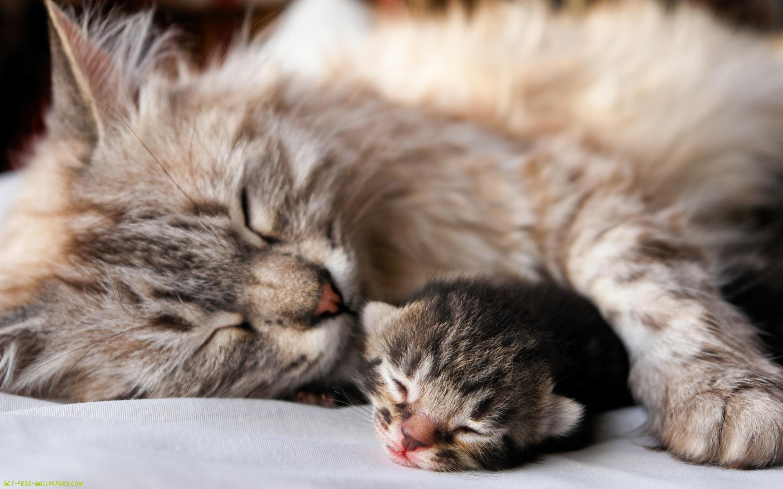 Download Baby Cat Wallpaper 2560x1600