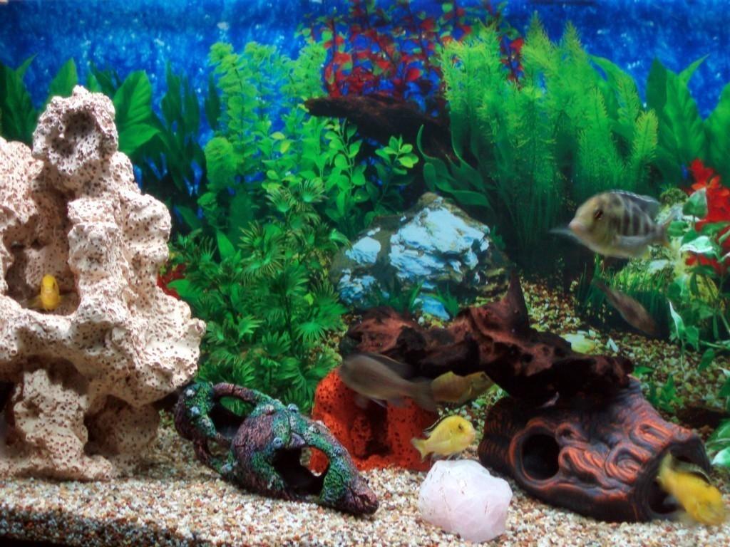 Aquarium wallpaper for computer wallpapersafari for Sfondi animati pesci