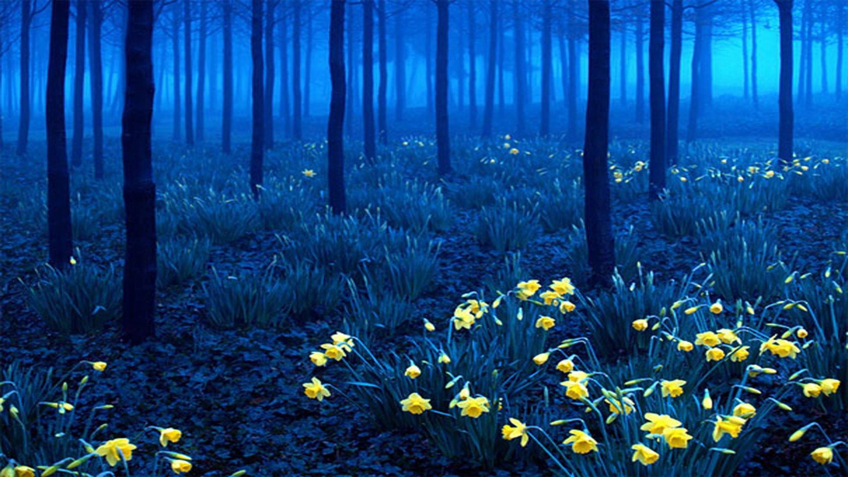 Black Forest Germany Wallpapers Wallpapers Pictures Piccit 1679x944
