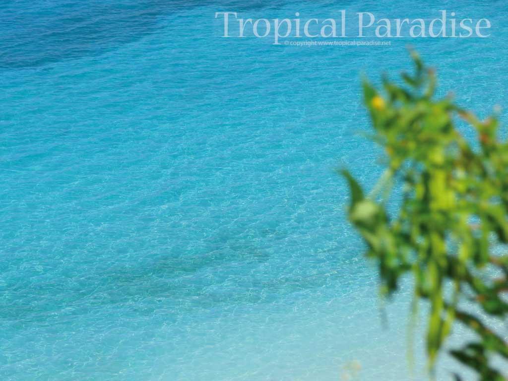 free caribbean wallpaper 1024x768