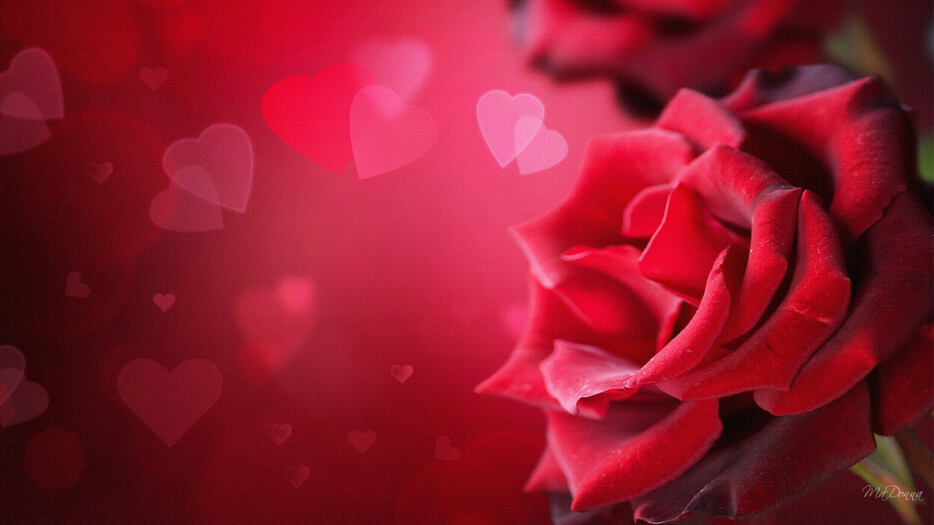 Valentines Day Desktop Wallpaper   Wallpaper High Definition High 1920x1080