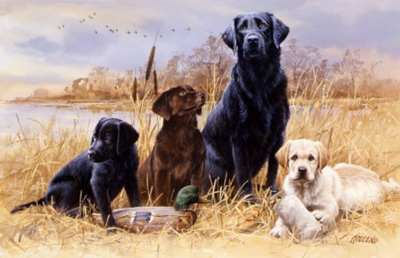 backgrounds for hunting dog wallpapers background   www