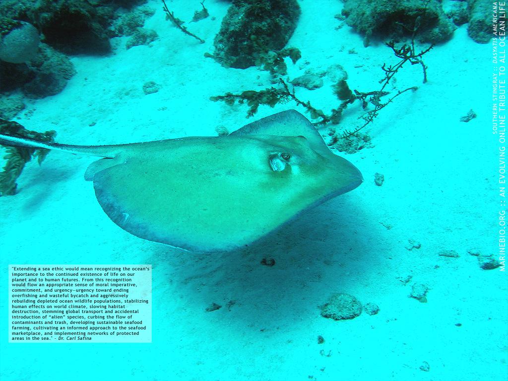 Rare Marine Animals Species that dont often 1024x768