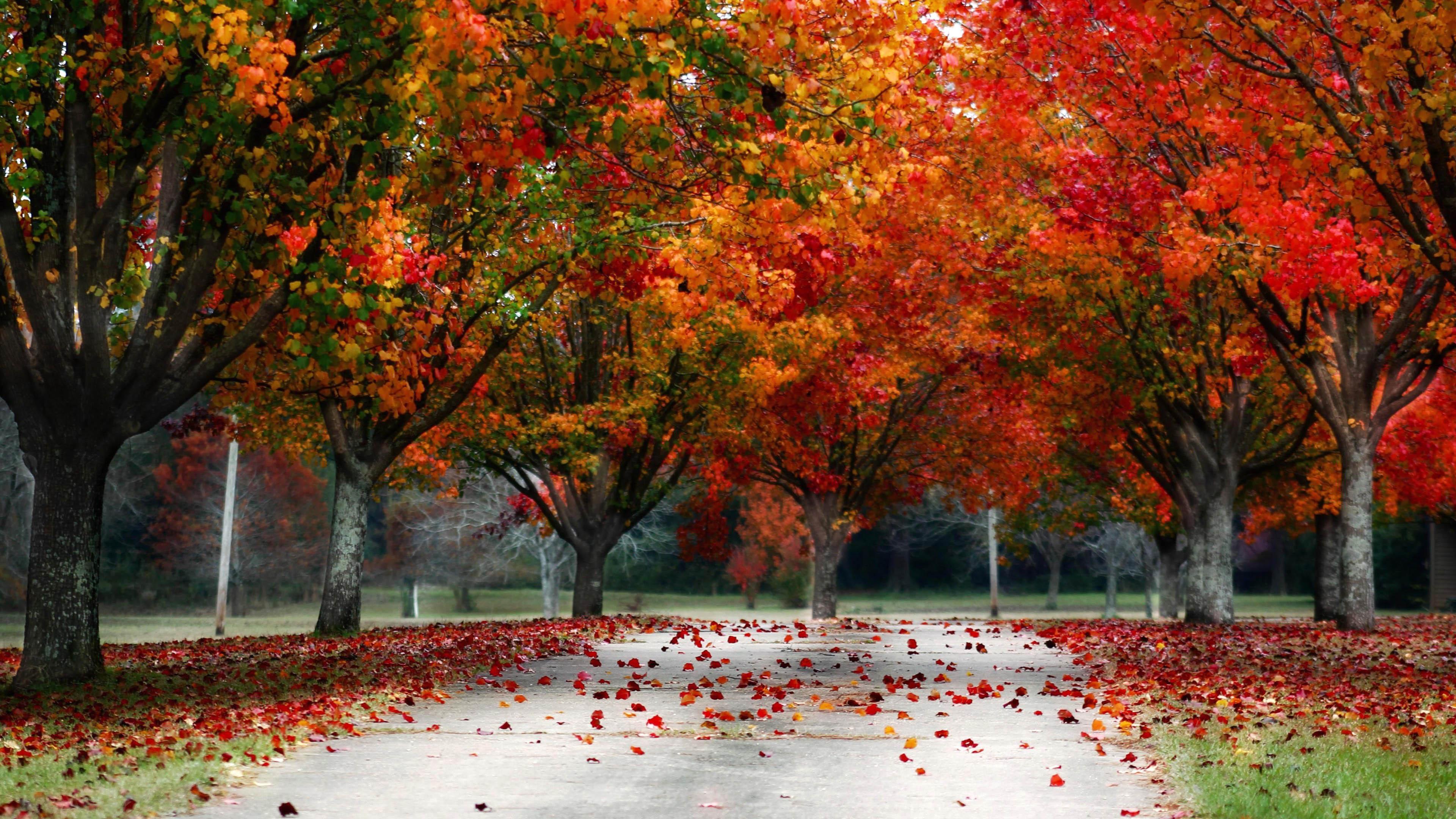 Fall Trees Autumn Colors - 3840x2160 - 4K 16/9 (Ultra HD ...