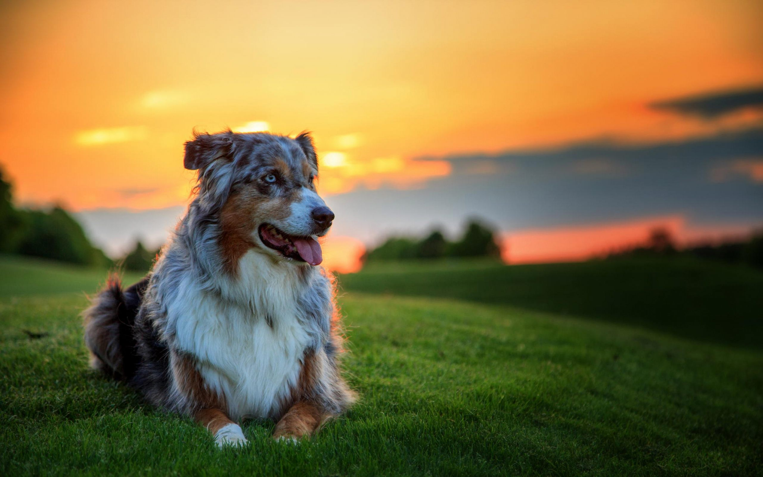 Dog Images Bethany Sarro download on 2560x1600