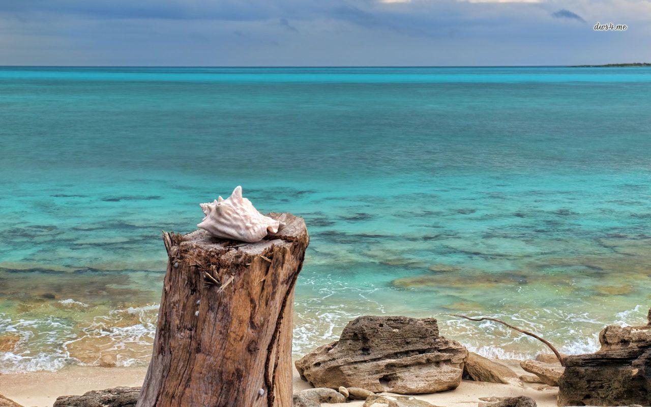 Seashells On The Beach Wallpaper