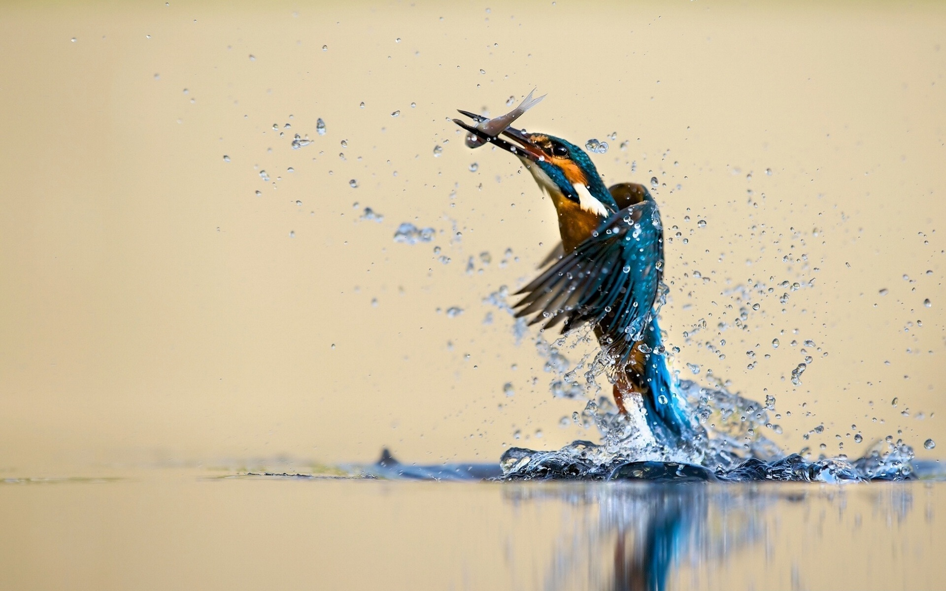 Bird hunting fish from water HD Wallpapers Rocks 1920x1200