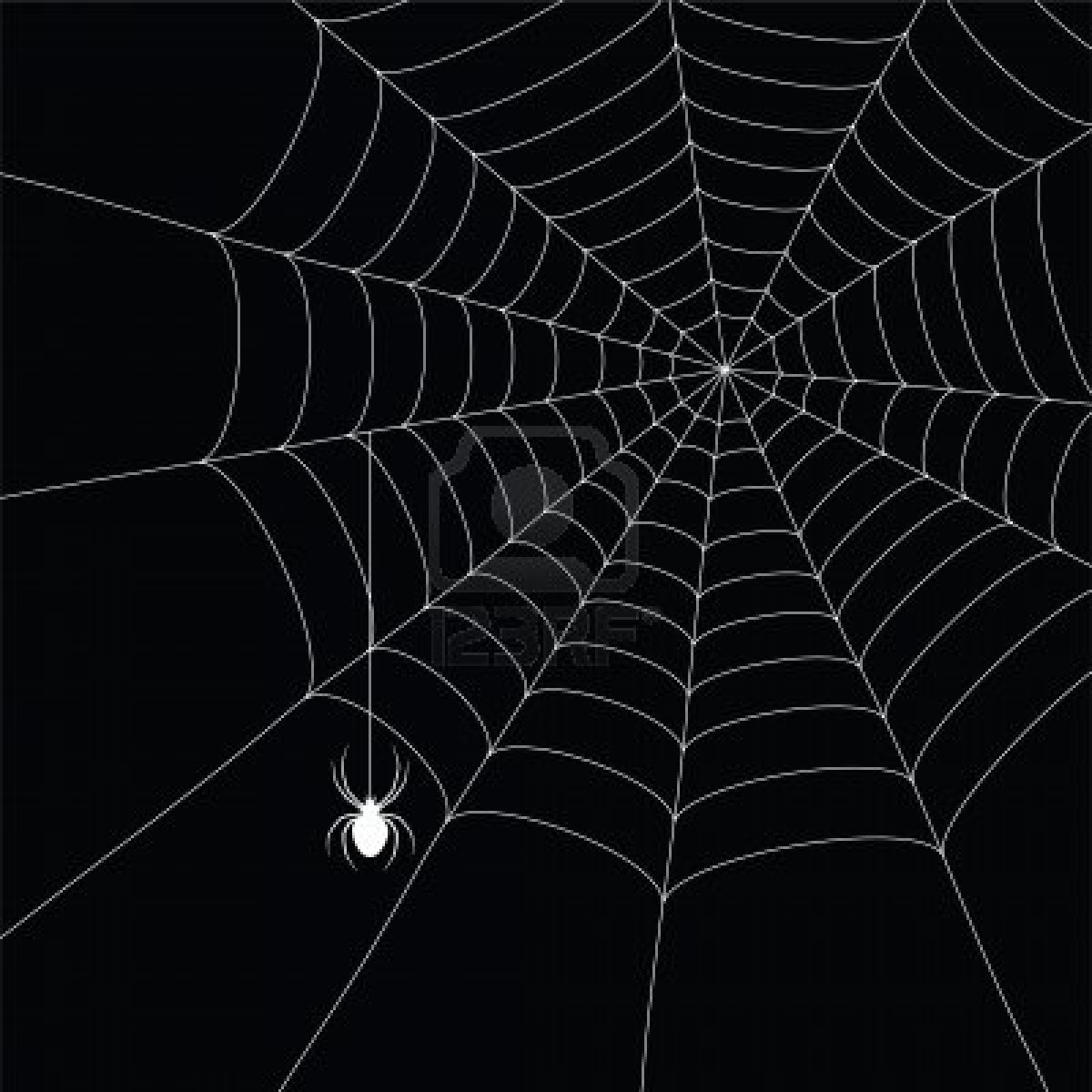 7985938 white spider and spider web isolated on the black background 1200x1200