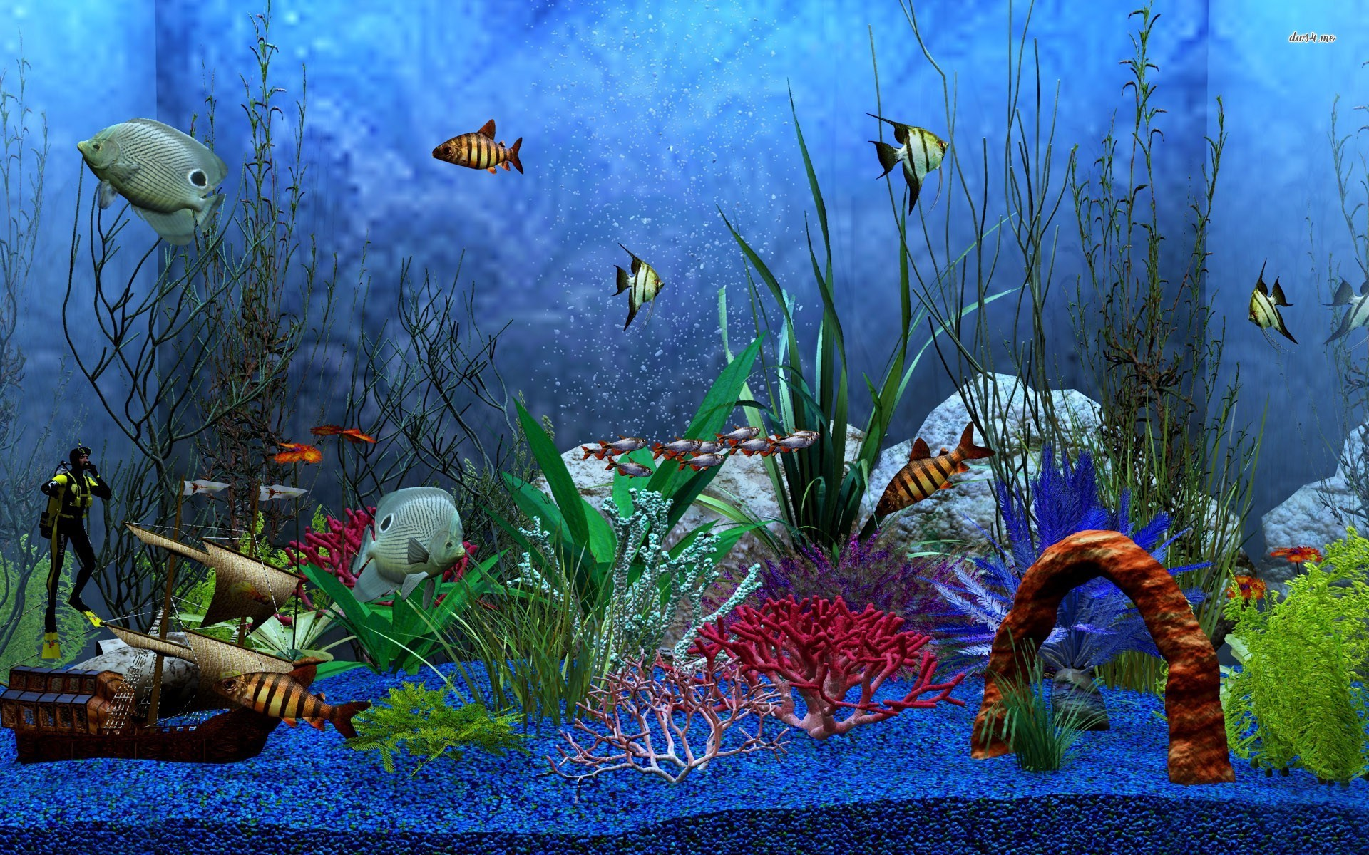 Aquarium hd 1080p wallpaper wallpapersafari for Fond ecran aquarium