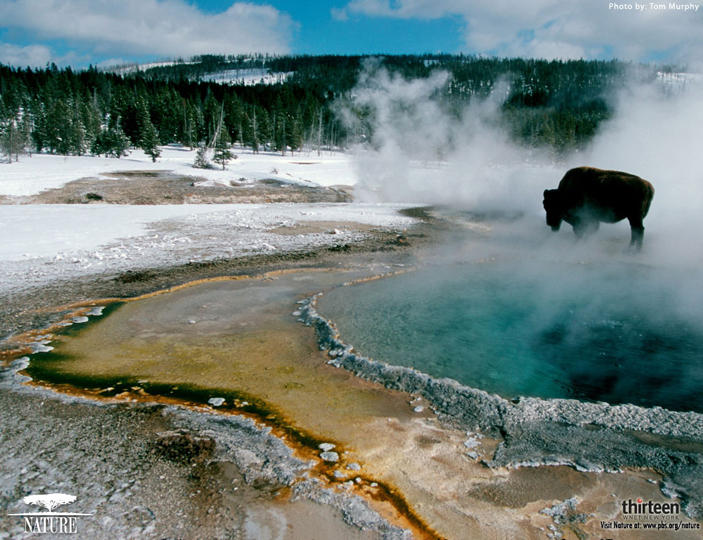 related wallpapers from yellowstone - photo #9