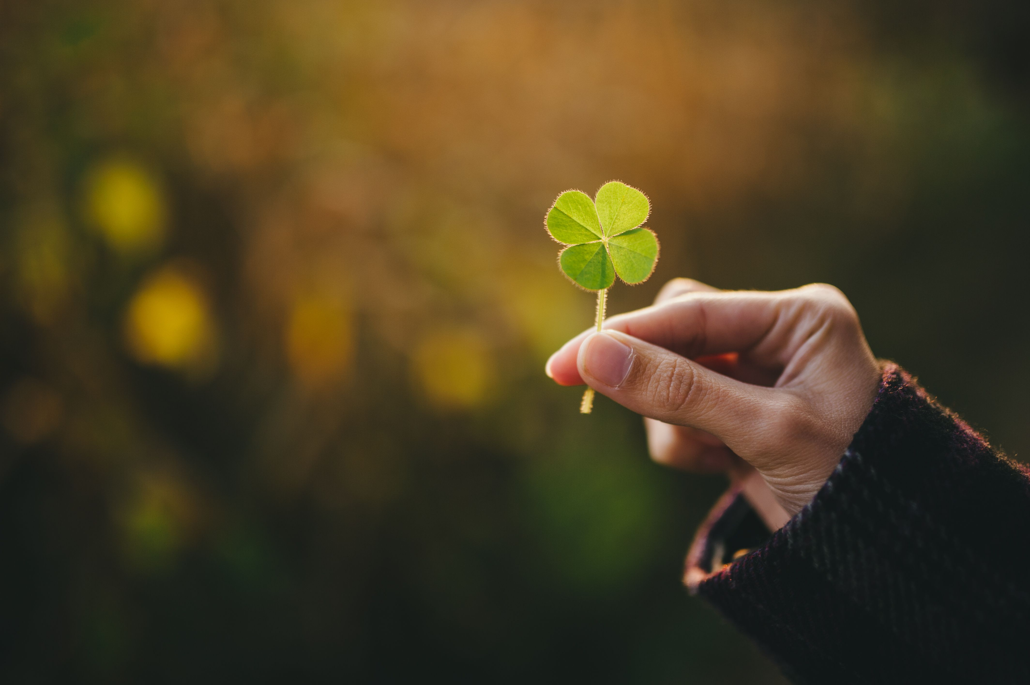 12 Lucky Charms to Attract Good Luck in Your Life 4256x2832