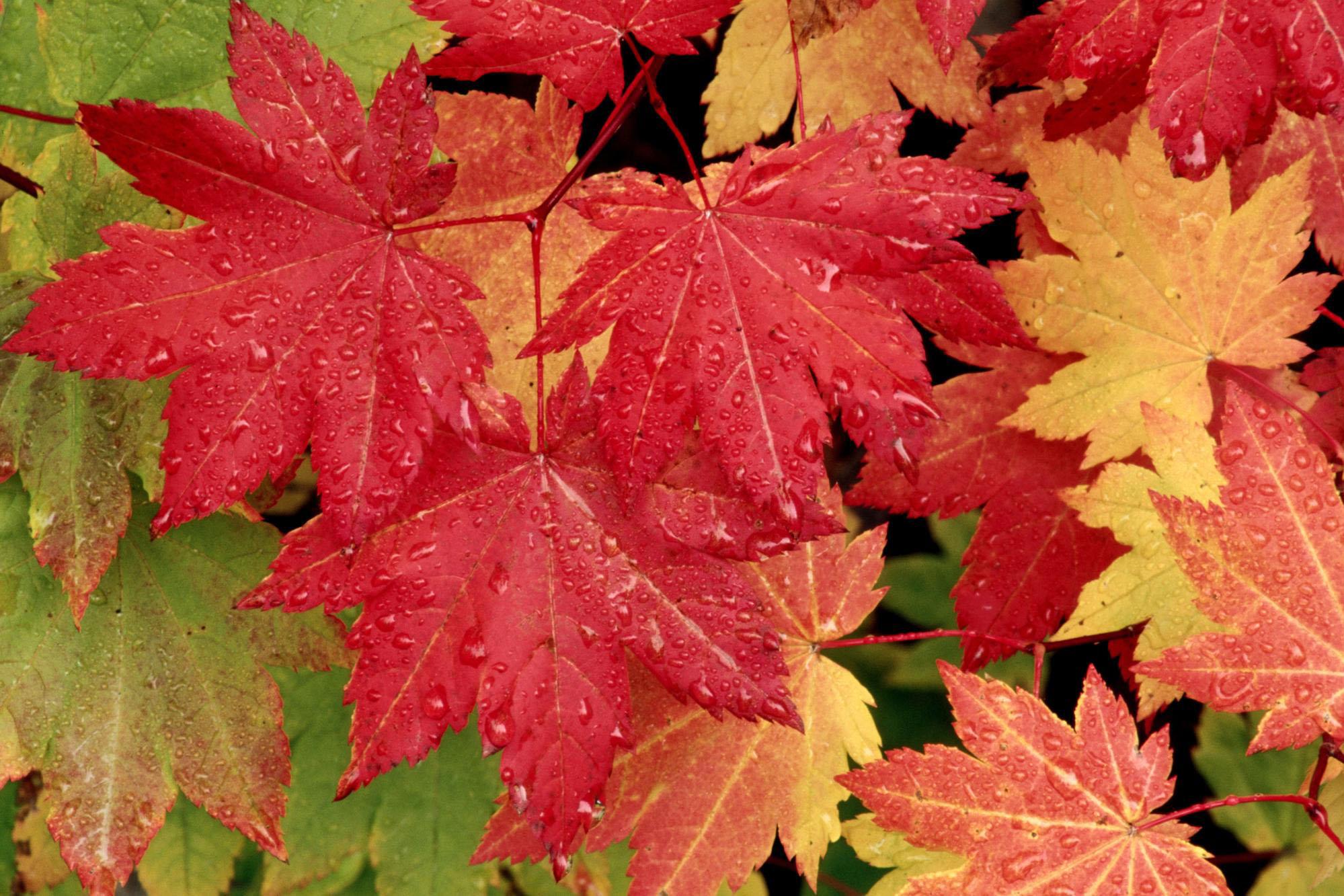 49 Autumn Wallpaper For Mac On Wallpapersafari