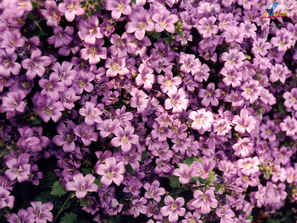 Flower Screensavers And Wallpaper Wallpapersafari