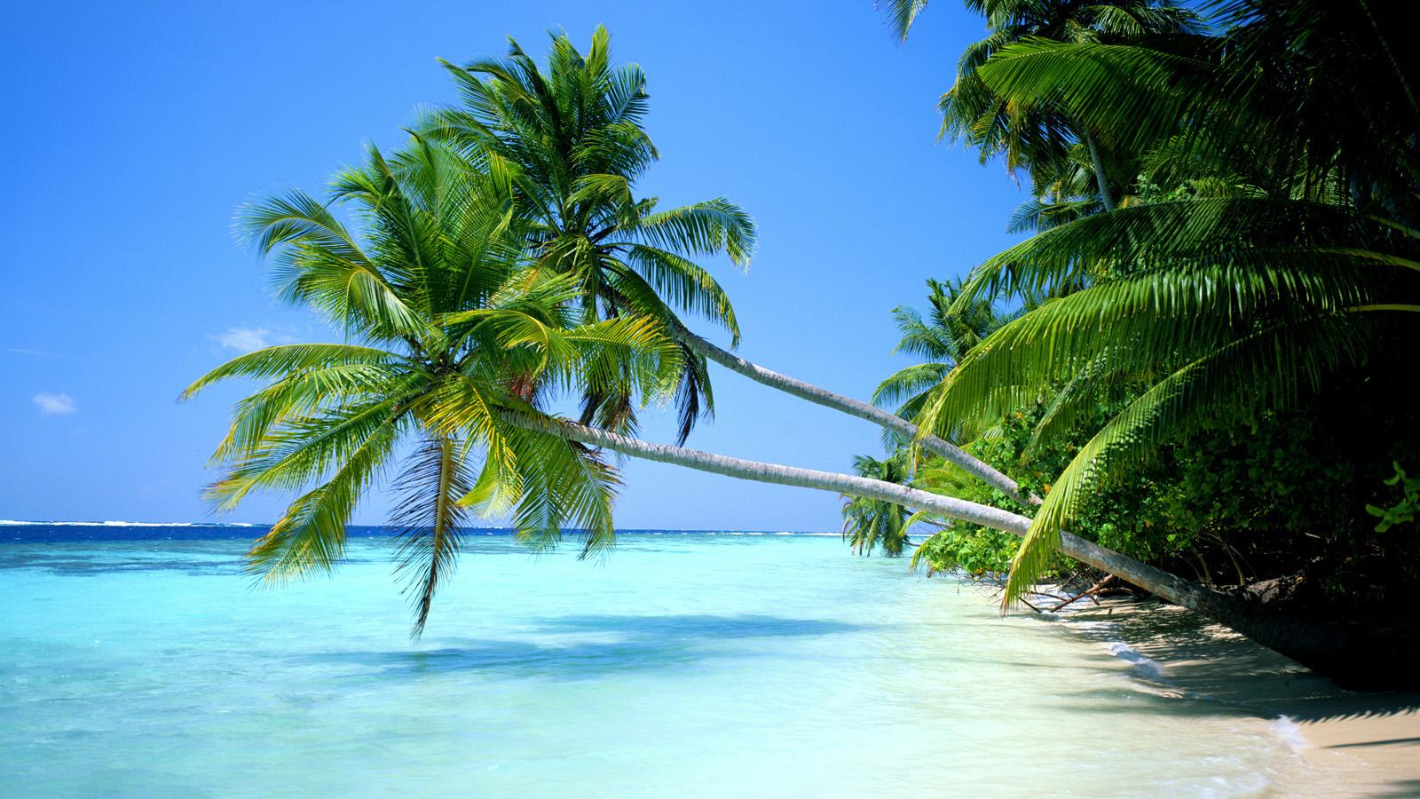 Tropical Beach Desktop Wallpaper 1600x900 pixel Popular HD Wallpaper 1600x900