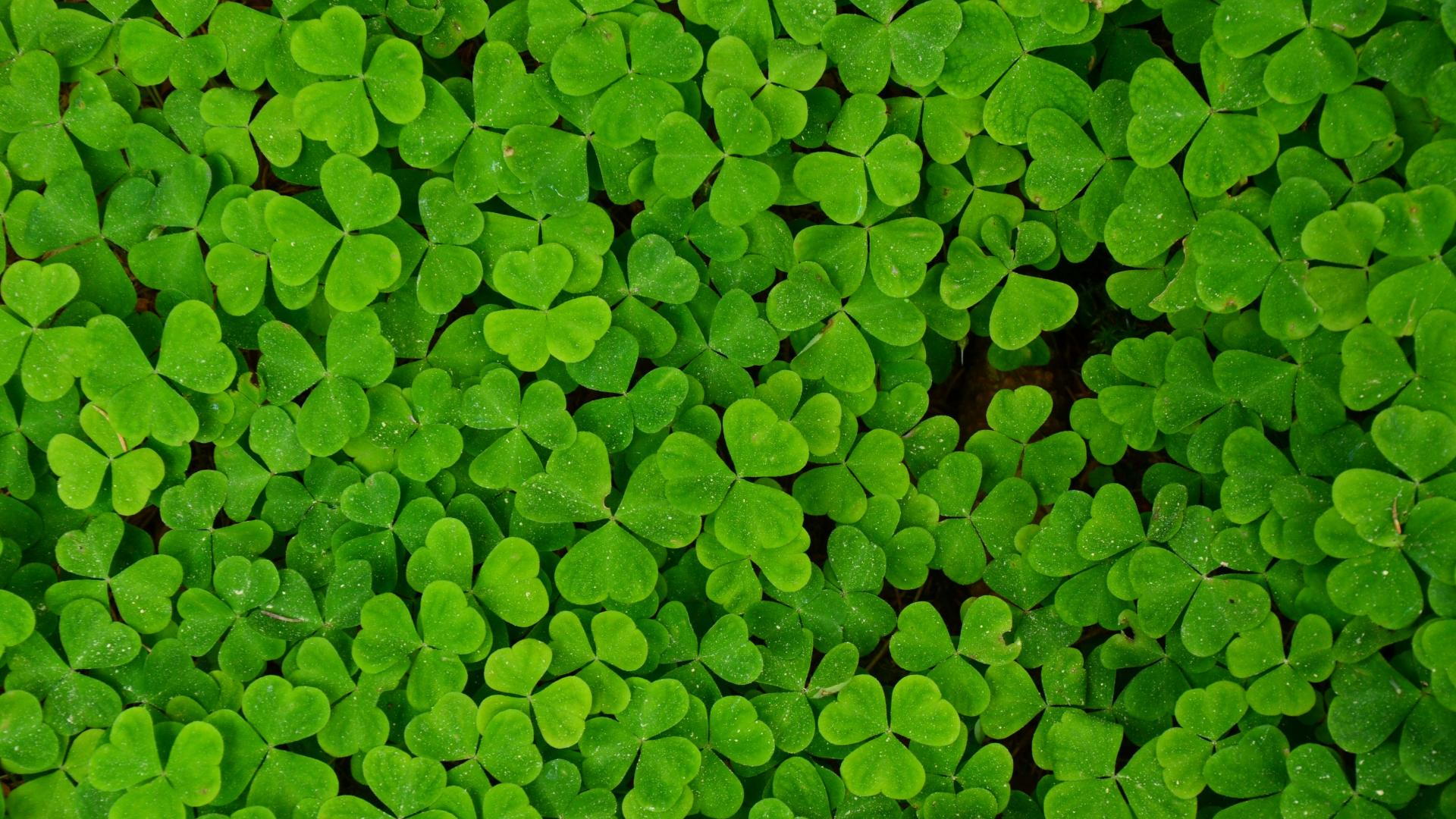Shamrock Background  WallpaperSafari