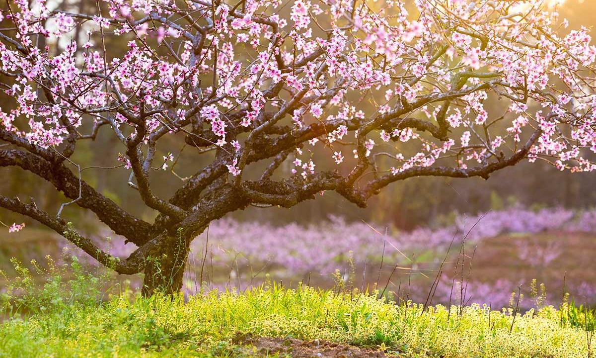 Spring Shipping Starts Today Arbor Day Blog 1200x720