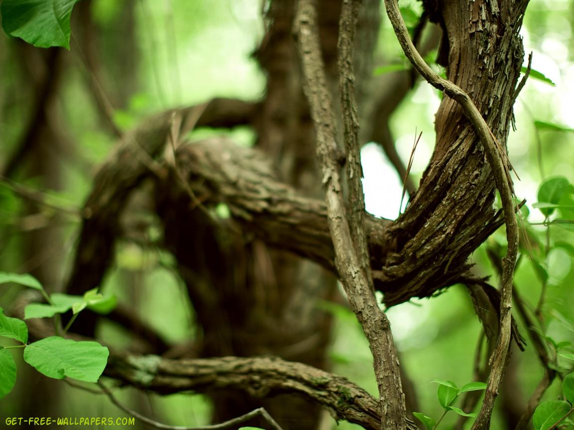 Download Tree Branch Wallpaper 1152x864