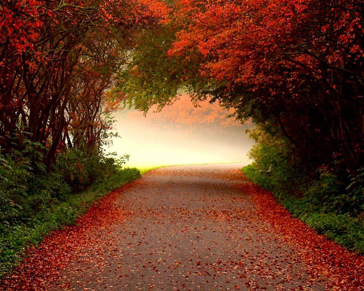 Fall Backgrounds Desktop 1280x1024