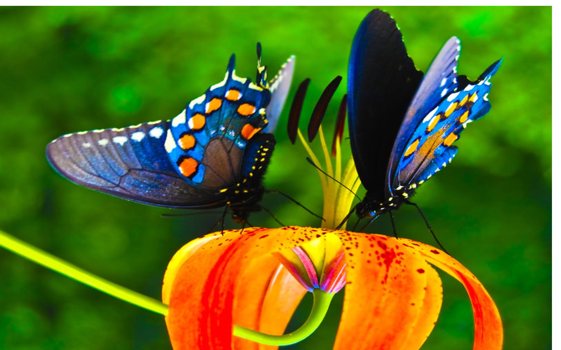 Colorful Butterfly Wallpaper 1920x1200