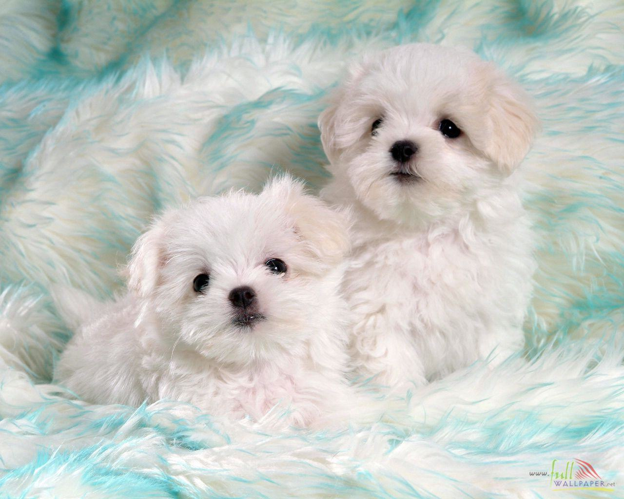45 Baby Puppy Wallpaper On Wallpapersafari