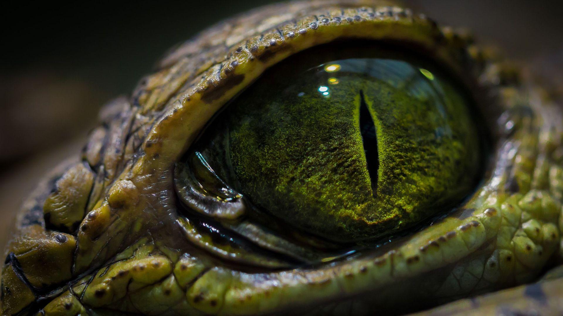 Crocodile eye wallpaper 17361 1920x1080