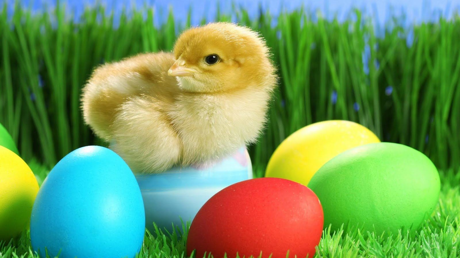 Funny Easter Wallpapers for Desktop Backgrounds Desktop 1600x900