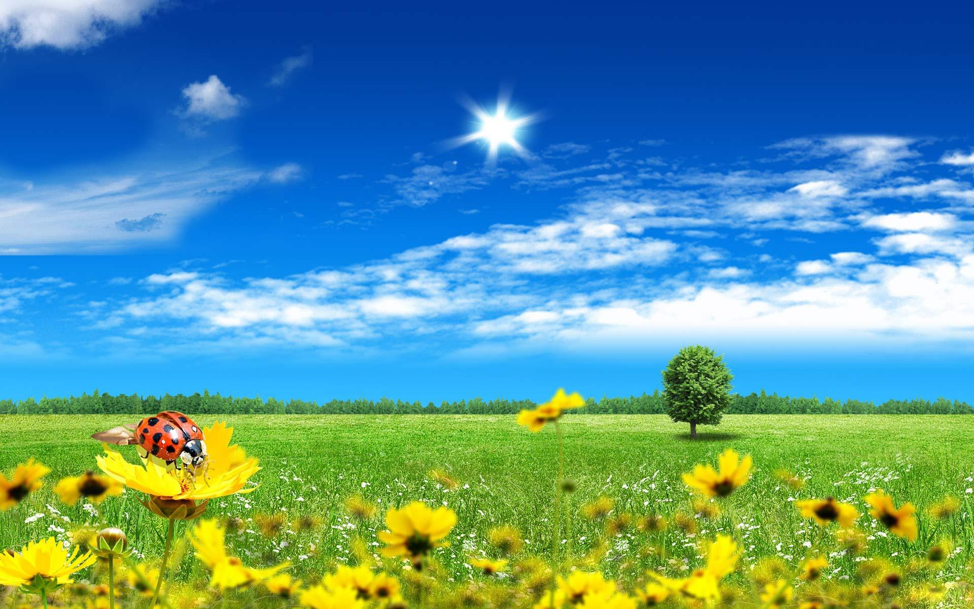 Beautiful Summer Backgrounds 1920x1200