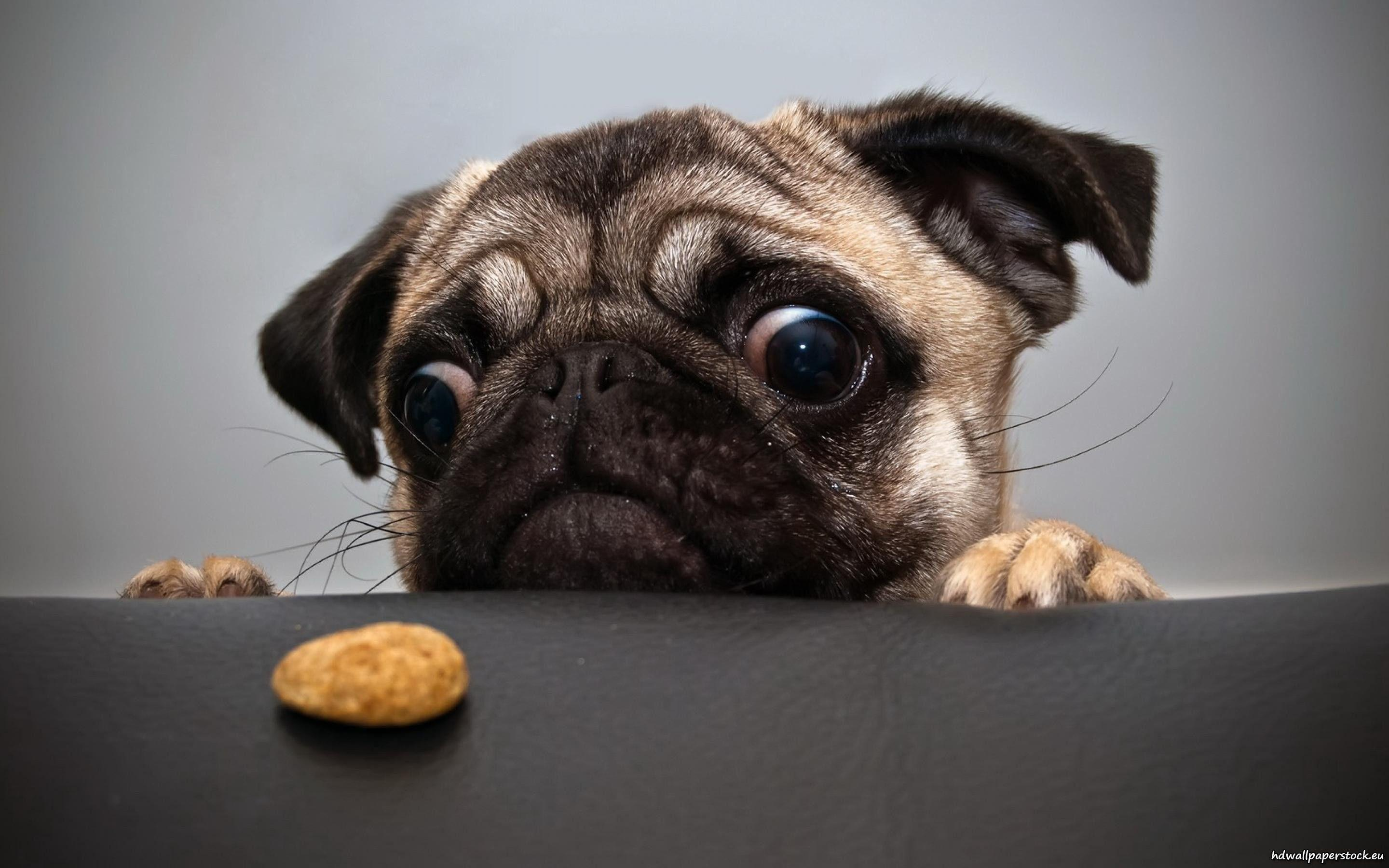 Funny Pet Wallpapers   Top Funny Pet Backgrounds 2880x1800