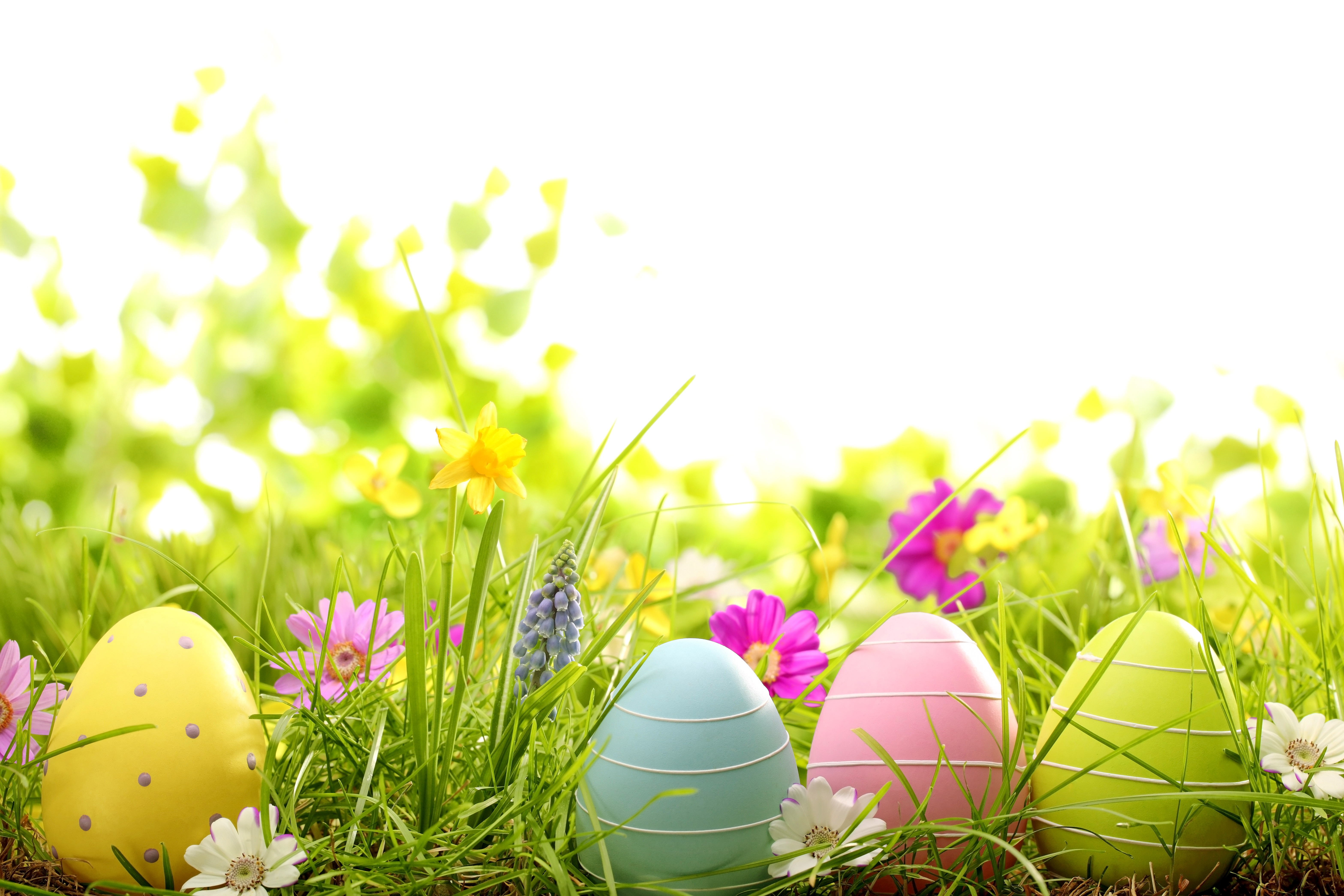 easter spring flowers eggs grass daisy camomile easter spring 6270x4180